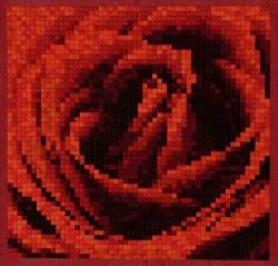 American Beauty Needlepoint